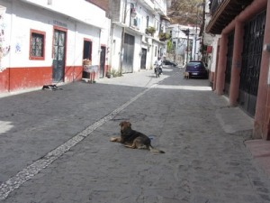 Dog in street, Taxco, Mexico