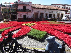 Zocolo_poinsettias - Taxco, Mexico