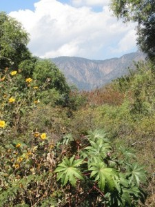 Mountains outside Ijide, Mexico