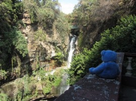 Blue Bear at Salto de San Anton