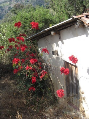 Mexican house with poinsettia
