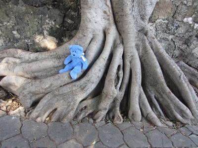 Blue Bear & tree roots