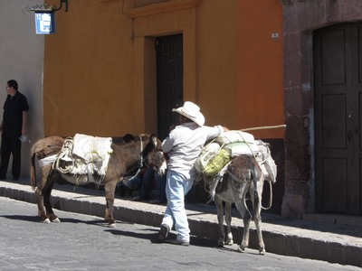 mules, Mexico