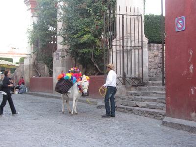 mule, San Miguel de Allende