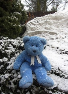 Blue Bear in snow