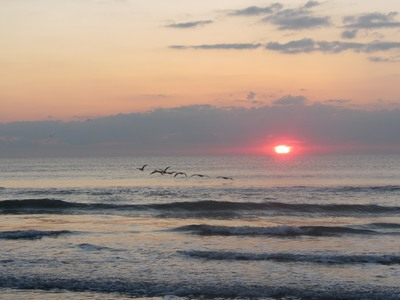 Sunrise with birds, Cocoa Beach Florida