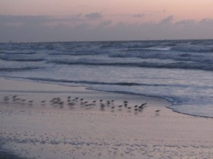 Birds on Cocoa Beach