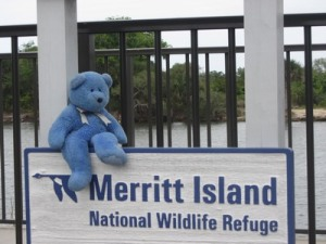 Blue Bear at Merritt Island National Wildlife Refuge