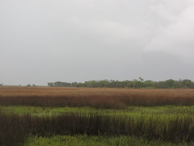 Salt marsh, St George Island, Florida