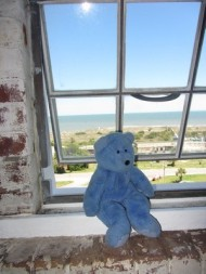 Blue Bear at window of Tybee Island light, Georgia