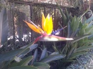 Bird of Paradise, Taxco, Mexico