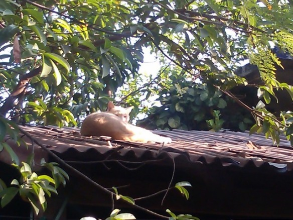 Cat on the roof, Ocotito, Mexico