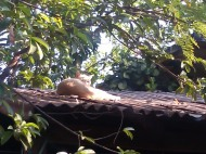 Cat on a tin roof, Family compound, Ocotito, Mexico