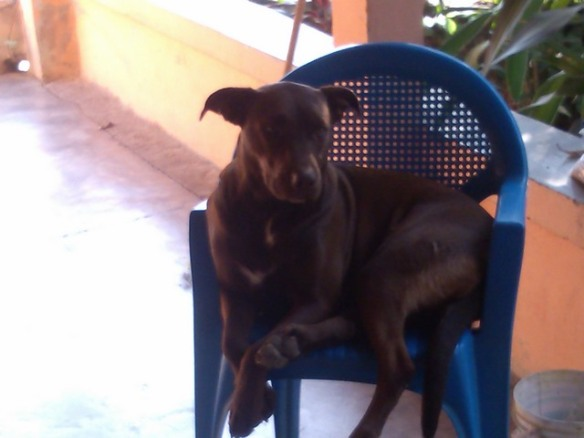 Dog in a chair, Ocotito, Mexico