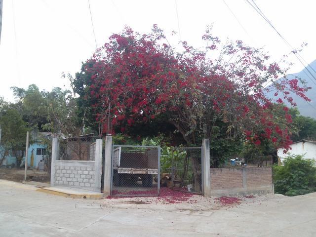 Courtyard wall, Ocotito, Mexico