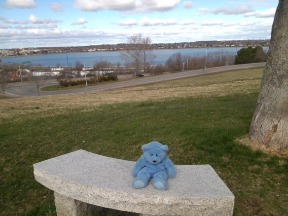 Blue Bear, Casco Bay, Portland, Maine