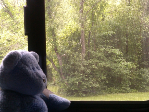 Blue Bear looking out trailer window